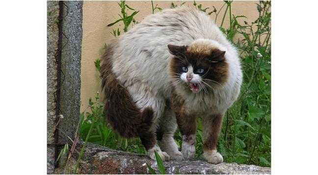 kattbust